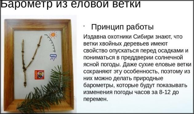 барометр Из хвойной ветки